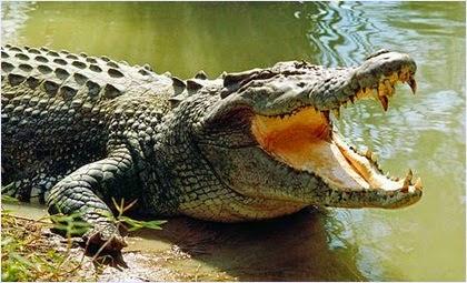 เลือดจระเข้ (Crocodile Blood)