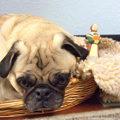 Pug realizes that he cannot eat the props