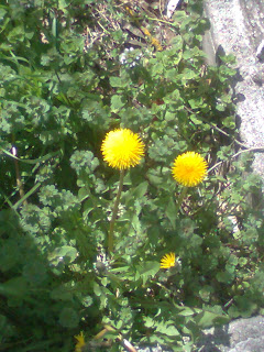 Dos flores amarillas