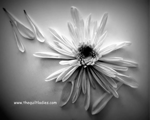 """Black and White Mum"" by Beth Ann Strub"