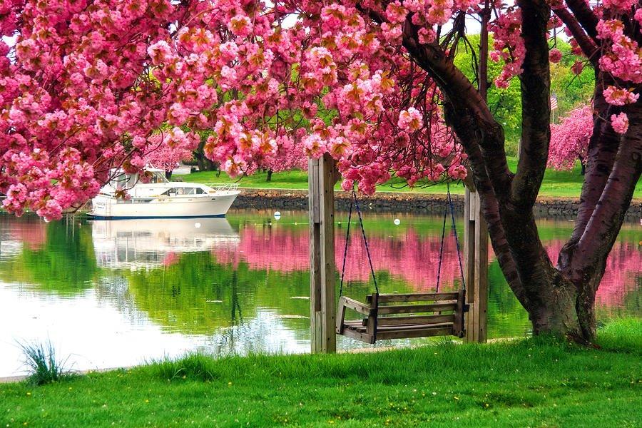 Gibidir baharın sonunda ağaçlar çiçek açar ve meyve verir yani o