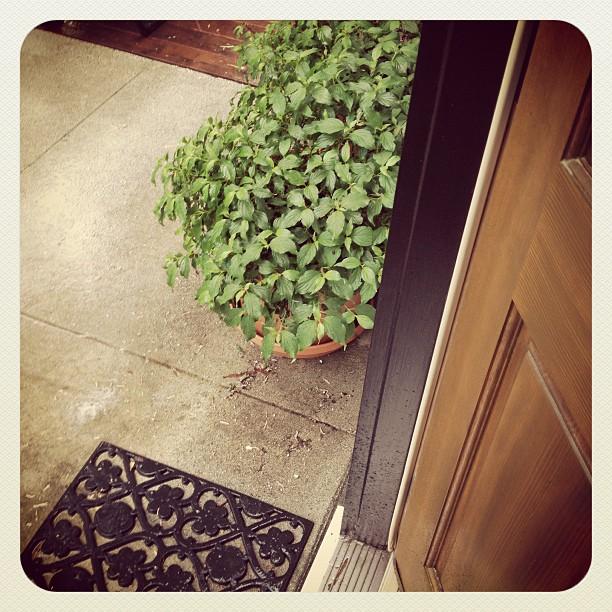 rain on my doorstep
