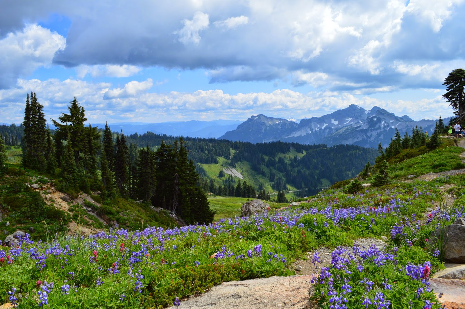 Wildflowers - Mount Rainier National Park