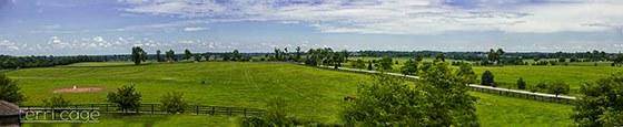 winstar farm, kentucky, kentucky farm, horse farm, kentucky horse farm, winstar farm kentucky, winstar kentucky