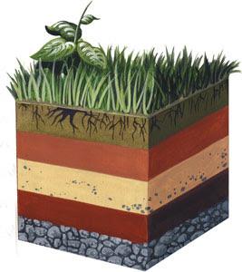 Tipos de suelos for El suelo y sus capas