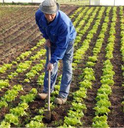 http://3.bp.blogspot.com/-tSD65QwaCdY/UEtpwqCMM0I/AAAAAAAAAoI/eTxmt7ZD3lI/s1600/agricultor.jpg