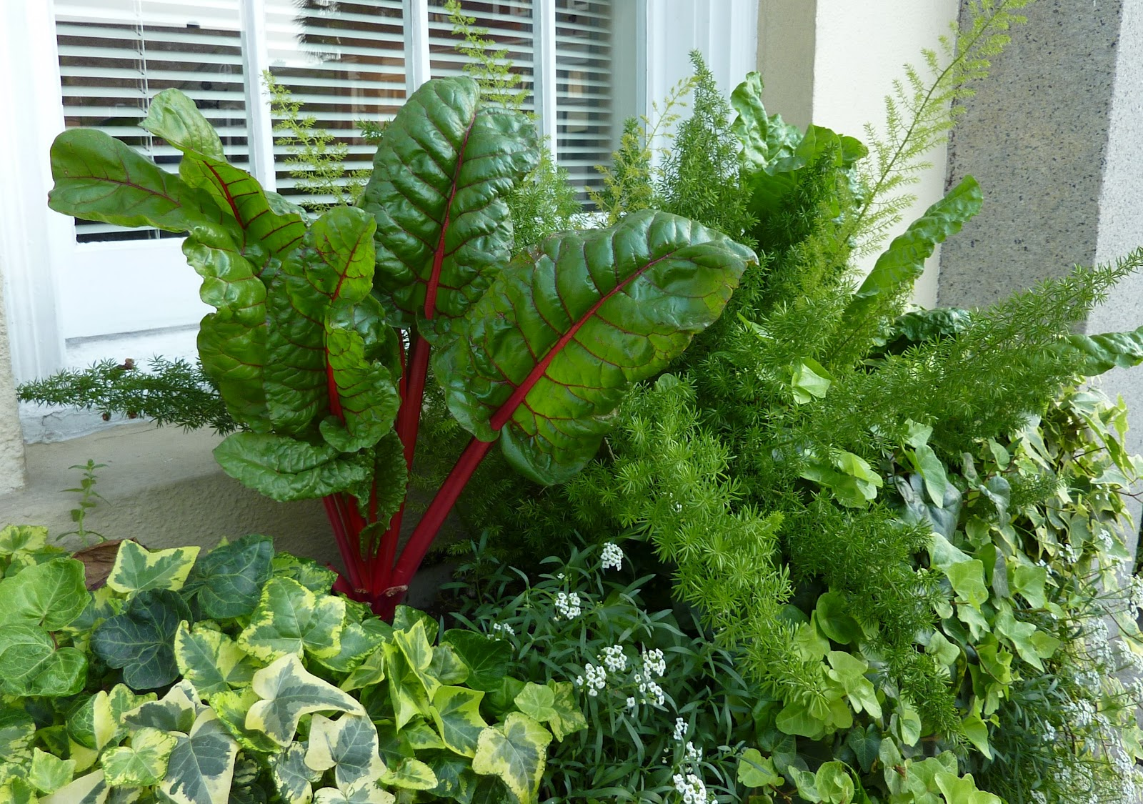 Vegetable garden planter boxes - Window Box In Commercial Building Charleston Sc With Lovely Red