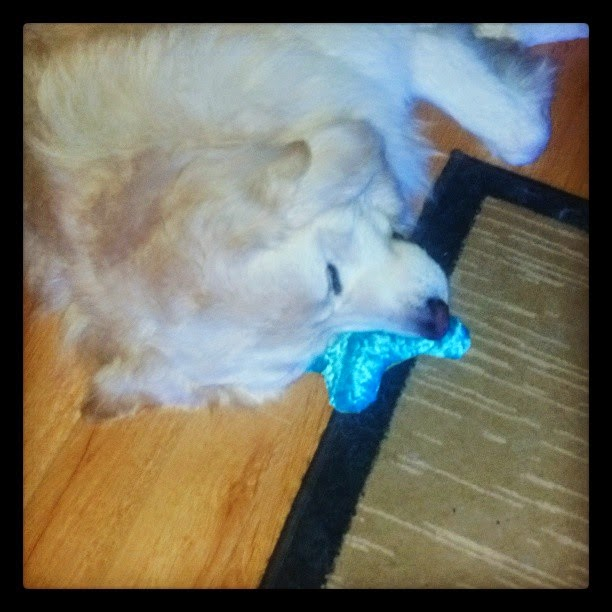 Dog Toys Make Good Pillows, Too