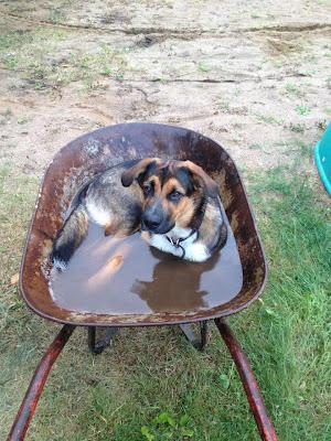 Piscina canina - Alberca para perros muy especiales
