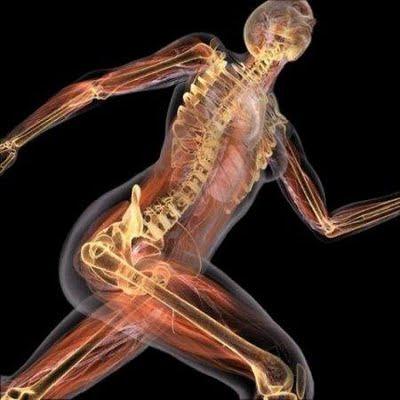 Algo más sobre Anatomía
