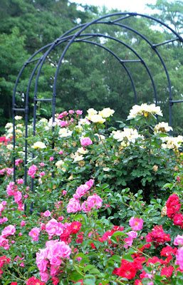 Robert L. Stanton Memorial Rose Garden