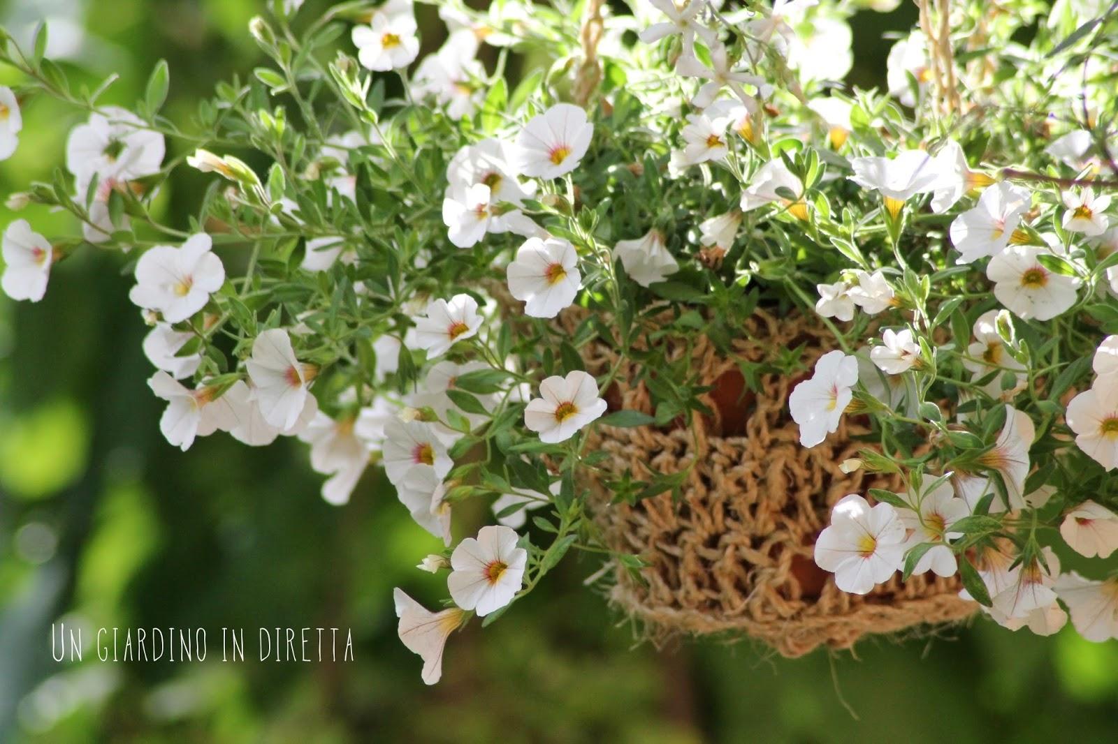 Giardini d 39 estate vota le foto di un giardino in diretta un giardino in diretta - Il giardino d estate ...
