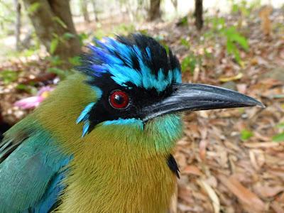 birding in Nicaragua