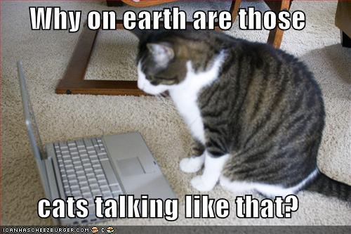 funny photos of cats. Talking cats funny cats