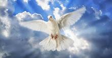 Paz para todos los seres