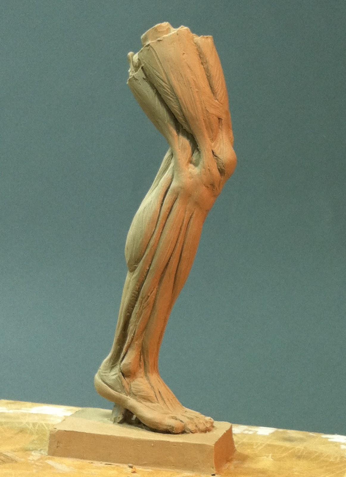Sutton Betti Sculpture and Drawings: #38 anatomy of the lower leg