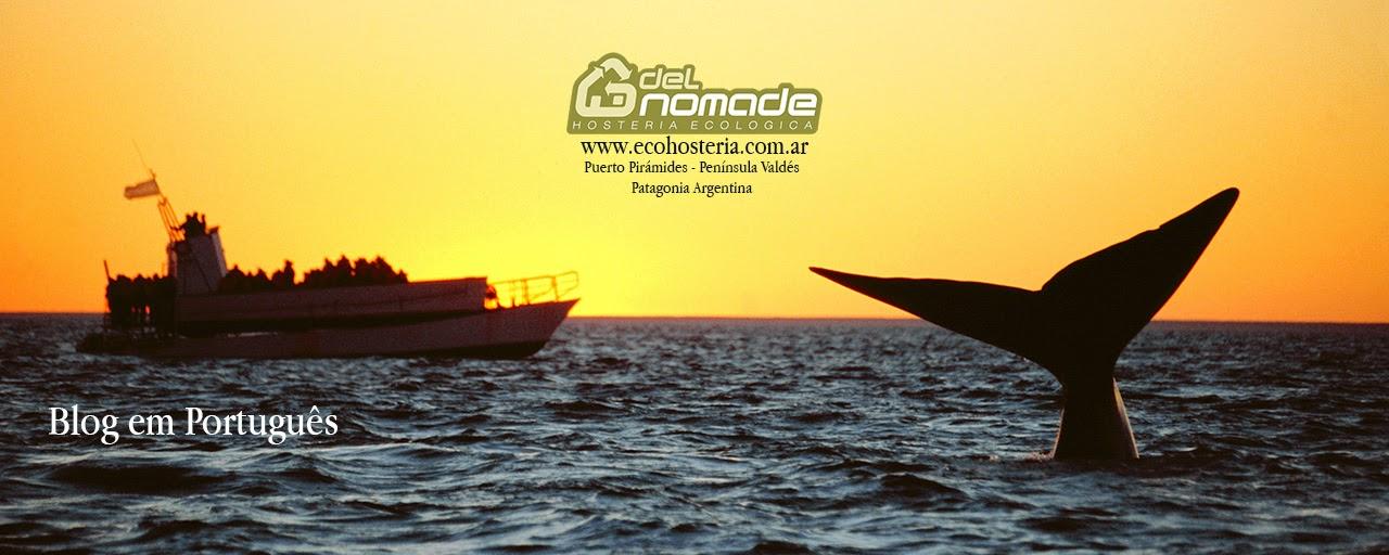 Avistagem de  Baleia Península Valdés Patagônia Puerto Pirámide Argentina Walbeobachtung halbinsel