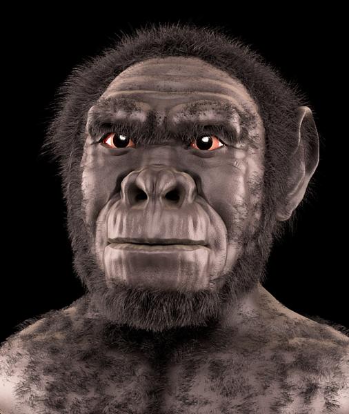 Gambar Manusia Purba - Homo Habilis