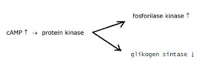 aktifitas protein kinase