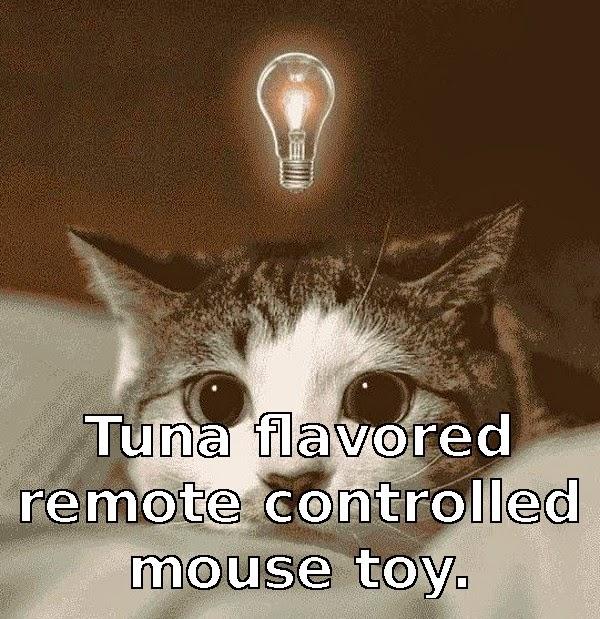 cat idea