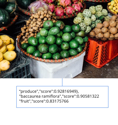Google Cloud Vision API changes the way applications understand images