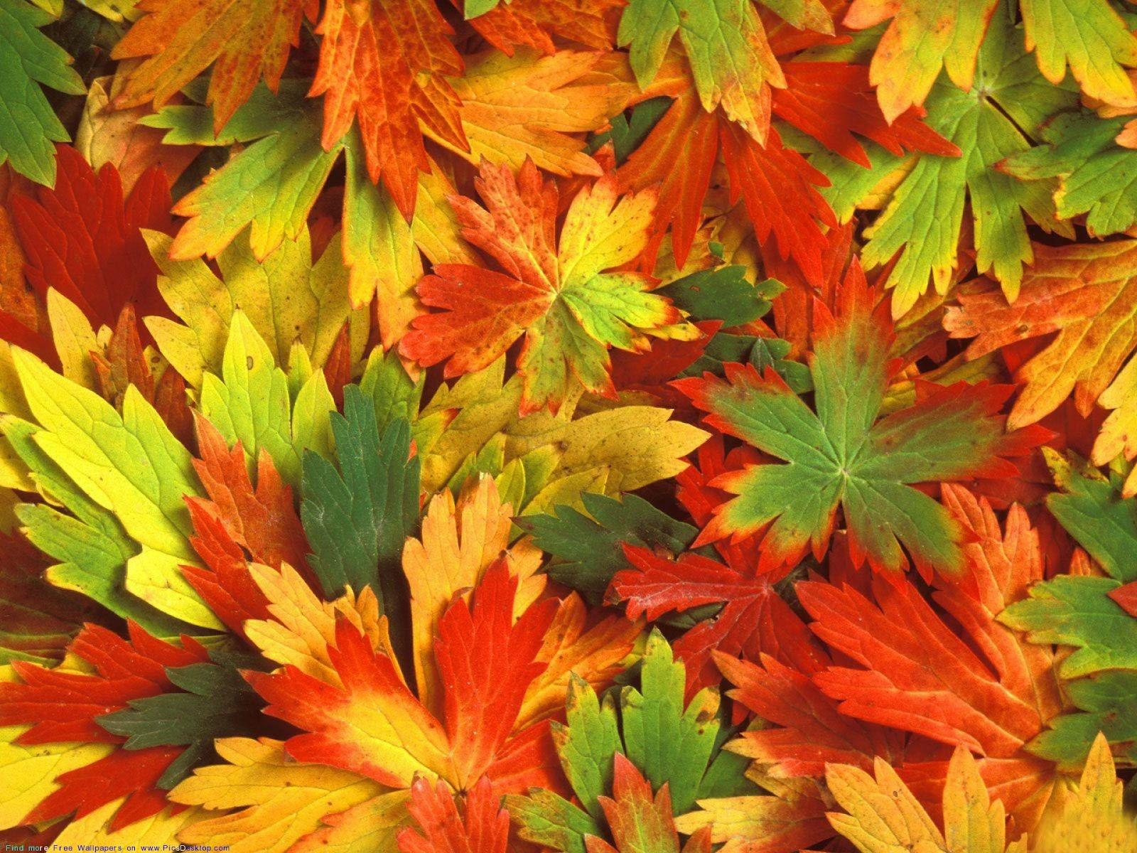 Beautiful Autumn Season Wallpapers | All HD Wallpapers