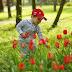 Вдохновение дождём...и тюльпаны