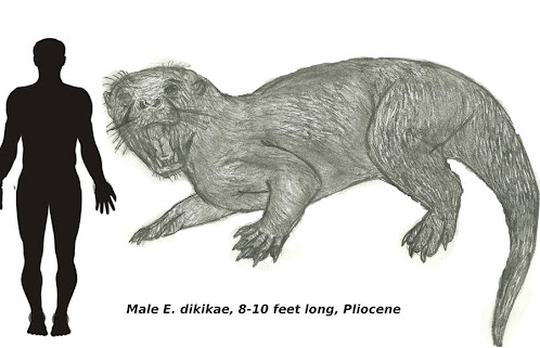mustelidae gigante prehistorica Enhydriodon