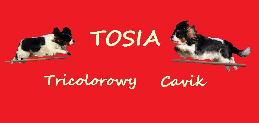Tricolorowy Cavik