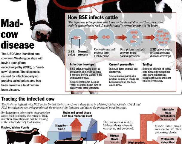 the horrifying details of mad cow disease Mad cow disease and its human variant never made huge inroads into the us, largely due to food safety practices that had always barred farmers from feeding their cows food made from most other animals (the uk did the same in 1989, while also slaughtering hundreds of thousands of cows as a precautionary measure) not everyone who eats infected.