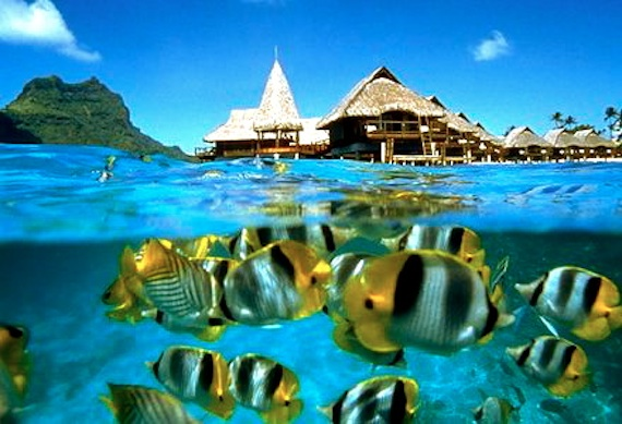 Bora Bora tropical fish