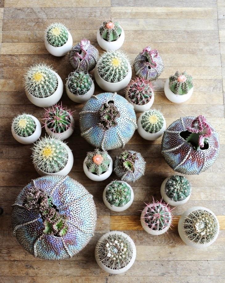 Cactus y suculentas supervivientes natas for Curso cactus y suculentas
