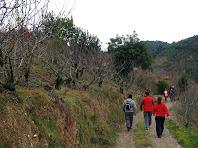 Caminant entre cirerers i garrofers