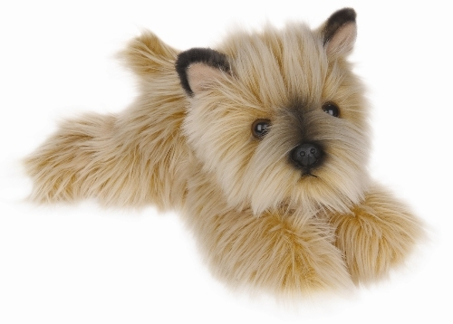 Must see Cairn Terrier Ball Adorable Dog - Cairn-Terrier-Puppy  2018_57436  .jpg