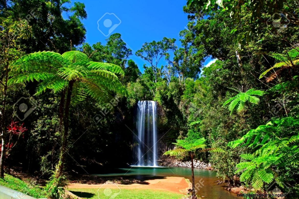 Tropical Rainforest Images Stock Pictures Royalty Free Tropical