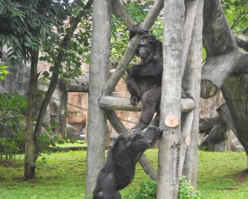 Kebun Binatang Ragunan, Jakarta