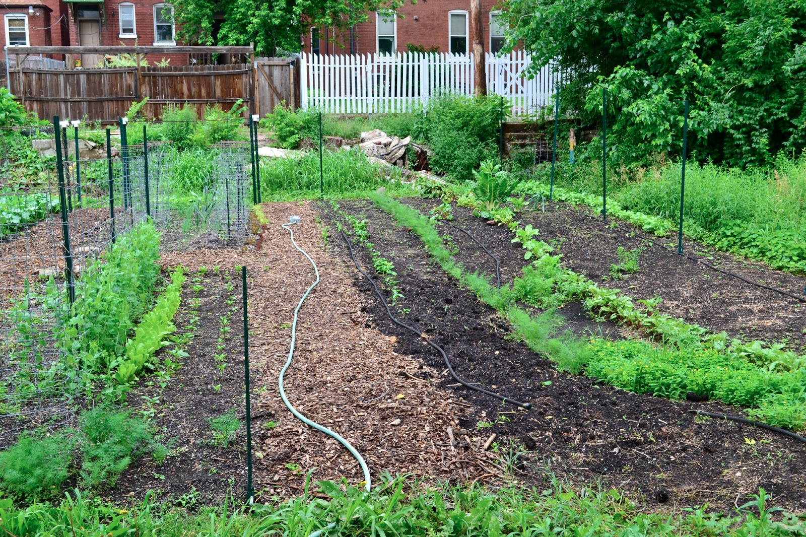 North St. Louis City community garden