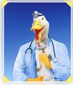 an examination of quack cures An alternative medicine quack reckoned he could cure faulkner of his twitching with a six-month what is the spanish term for pass an exam hacer un examen.