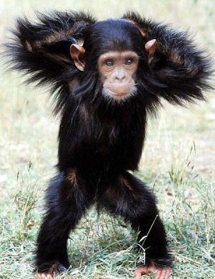 Mono pequeño