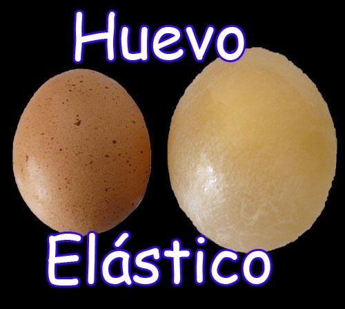 el huevo antes y despues del experimento