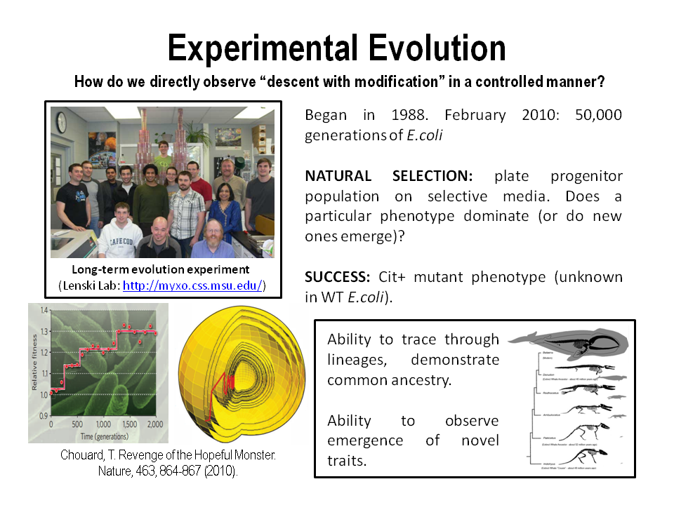 gene evolution term papers Genetics research papers examine primate social behavior research papers discuss the studies by scientists that get a better grasp on human behavior and evolution.