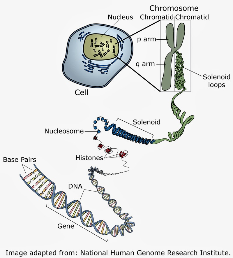 gene and dna relationship rna