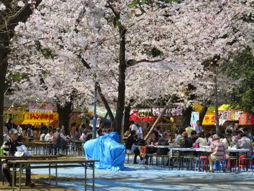 靖国神社の桜02