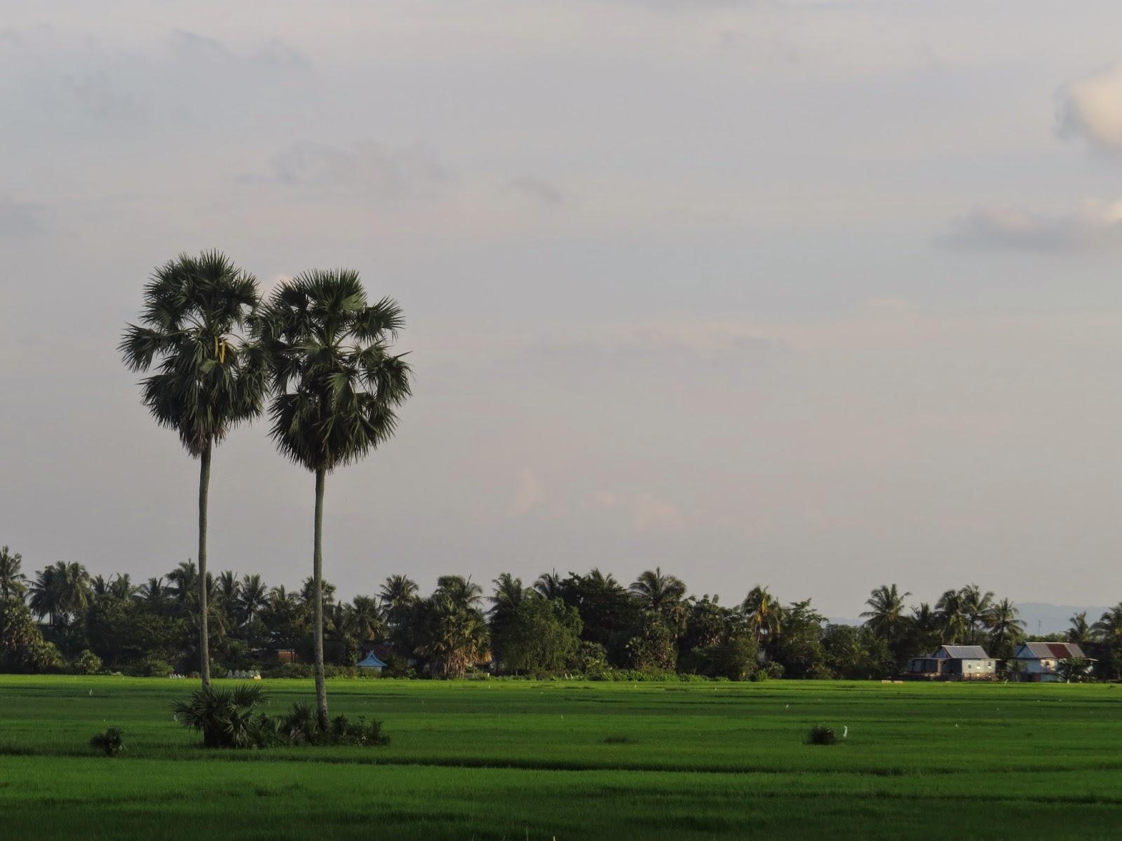 Sepasang Pohon Lontara