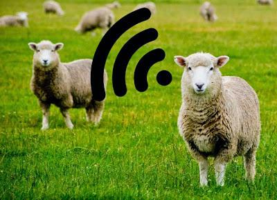 Πανεπιστήμιο στην Αγγλία σκοπεύει να κάνει τα πρόβατα σε απομακρυσμένες περιοχές… WiFi hotspots