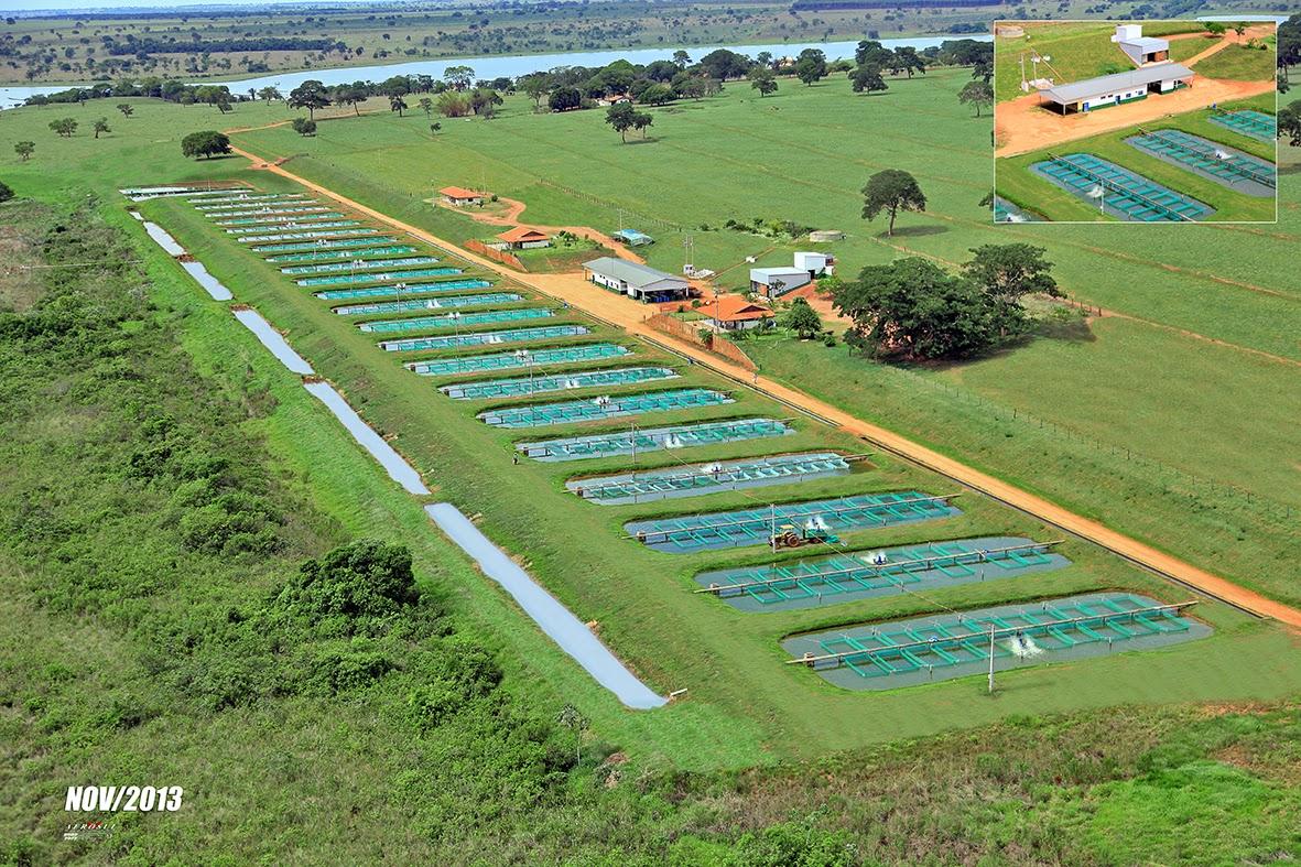 Cria peixe tilapicultura aquabel o nome da til pia for Tanques para cachamas