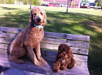 Heather Spezzano's Dogs Enjoy the Dog Park Site