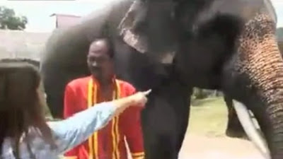 Éléphant mange l'iPhone d'une touriste