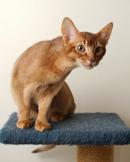 Kumpulan Gambar Kucing Imut dan Cantik