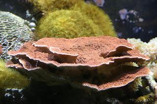 Bagaimana-Cara-Bunga-Koral-Menangkap-Mangsanya-1